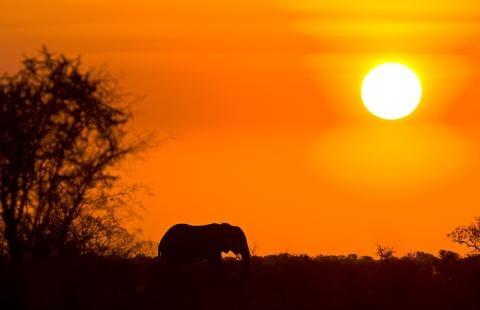 Elefant i aftensolen - Sydafrika Kontrasternes Land