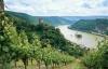 Vinmarker ved Rhinen