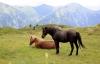 Heste i Østrig