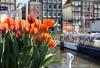 Kanaler og tulipaner i Amsterdam