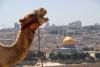 Kamel i Jerusalem.