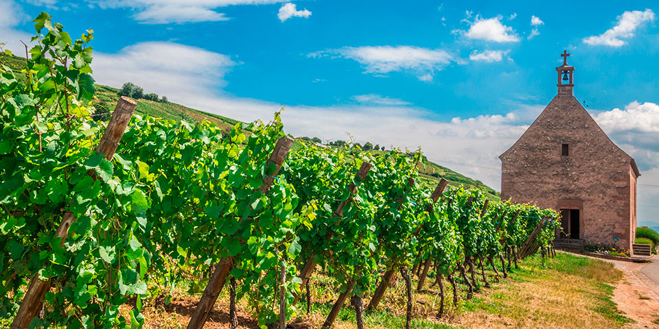 Vinmark i Riquewihr, Alsace.