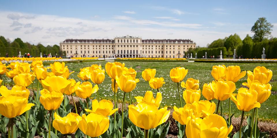 Parken ved Schönbrunn i blomst.
