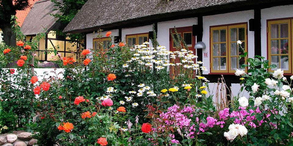 Farverig have på idylliske Samsø.