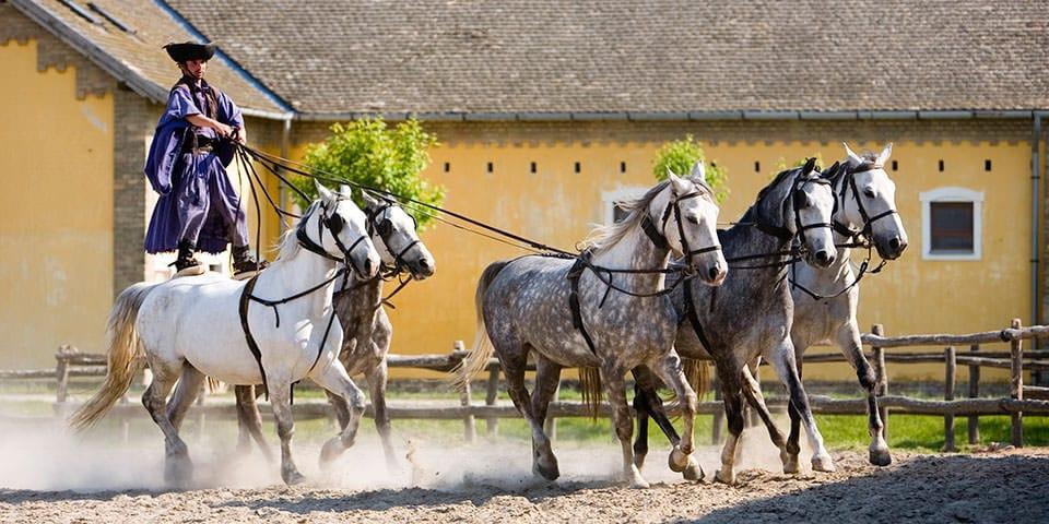 Hesteshow på Pusztaen.