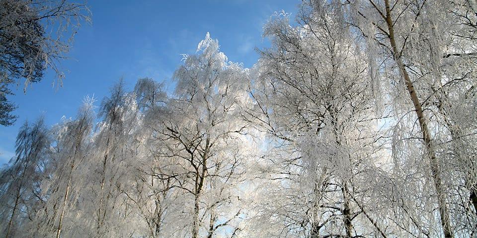 Vinterlandskab - Julerejse til Viborg