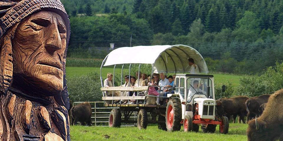 Med traktortrukket prærievogn skal vi opleve de store bisonokser.