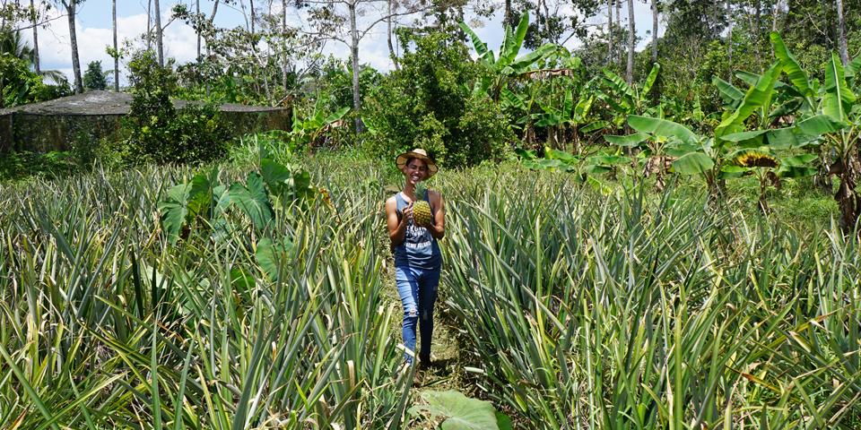 Besøg på ananasfarm ved Sarapiqui.