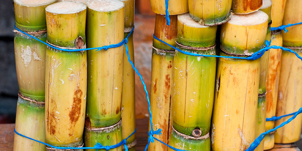 Friske sukkerrør.