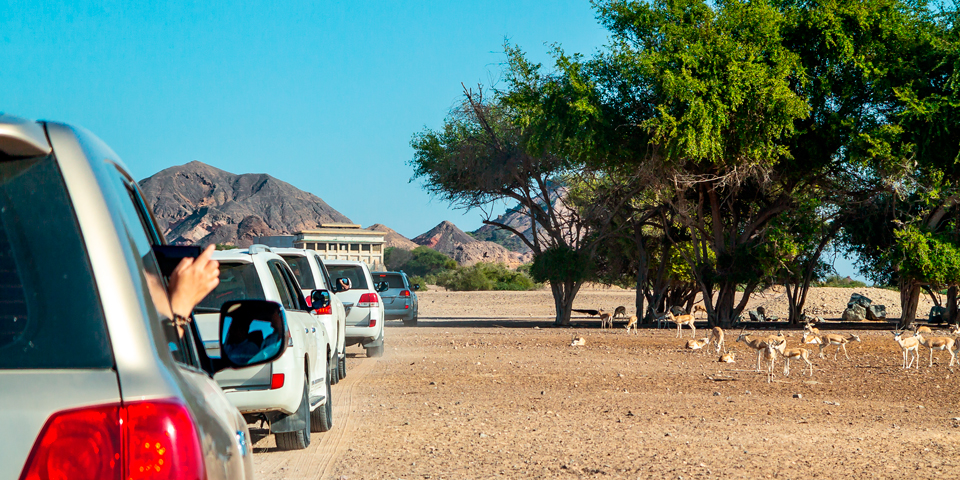 Safari på Sir Bani Yas.