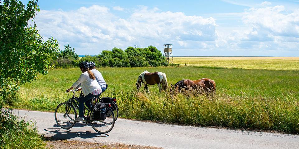 På cykeltur Endelave rundt.
