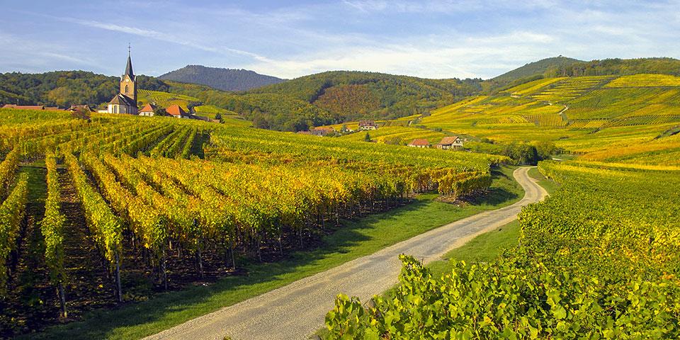 Vinmarker langs Route des Vins.
