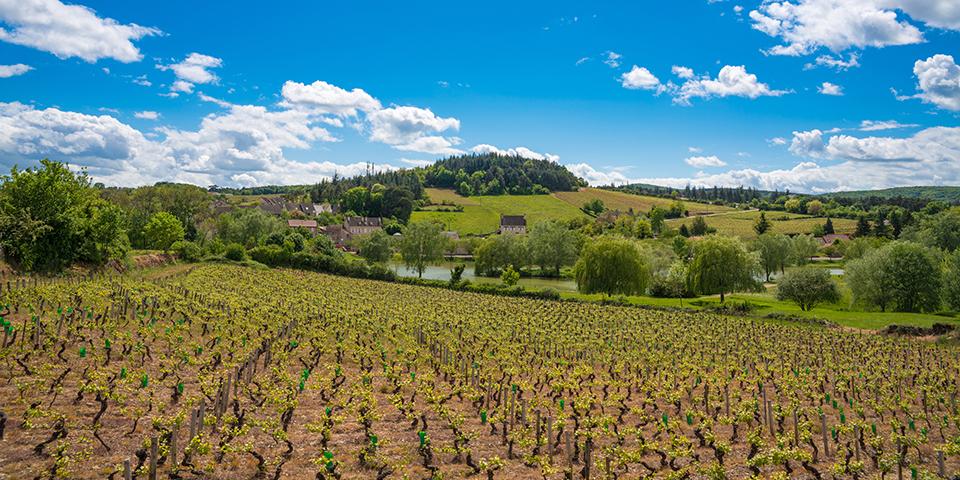 Vinmarker i Bourgogne.