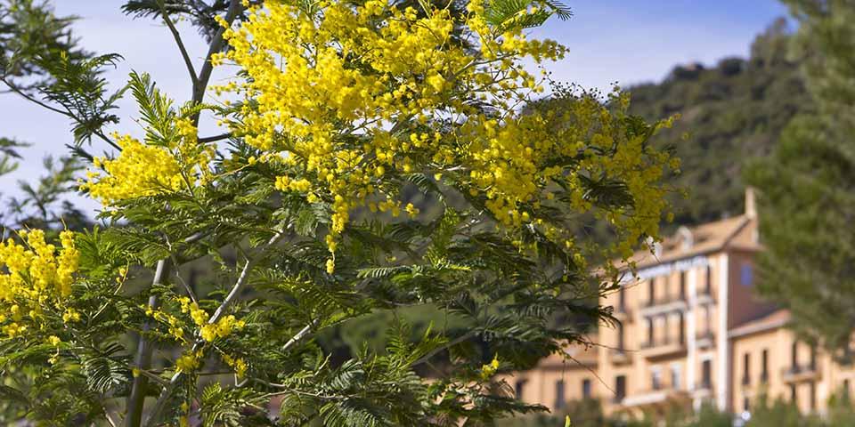 De smukke blomster er ikke kun til pynt, men bruges i mange foreskellige produkter.