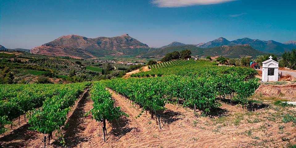 Vinmarkerne breder sig i området ved Nemea.