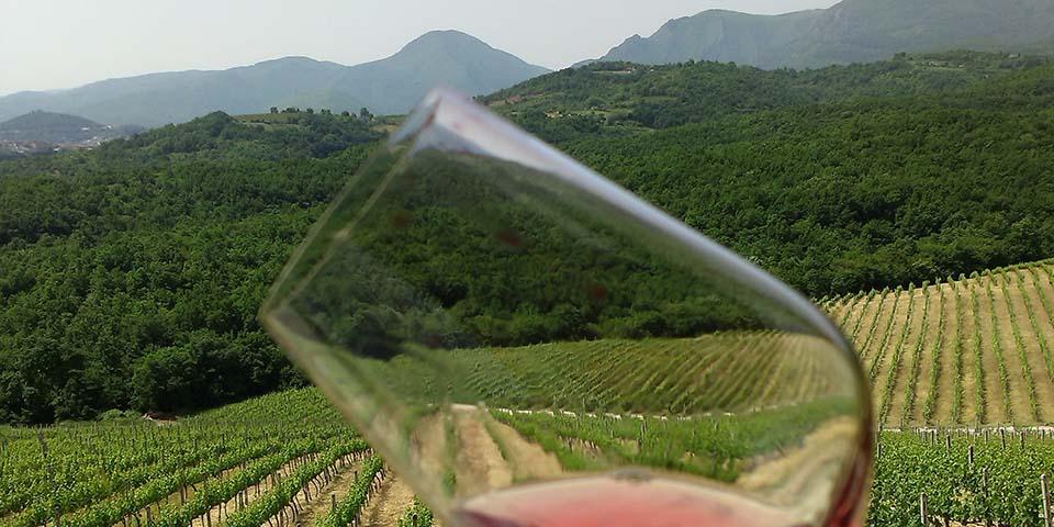 I Grækenland produceres der glimrende vin.