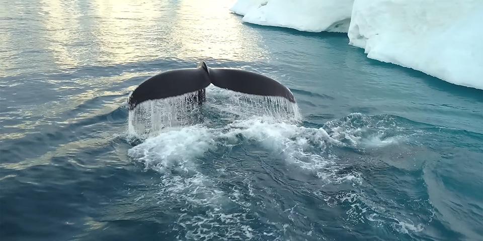 Husk kameraet på dagens hvalsafari.
