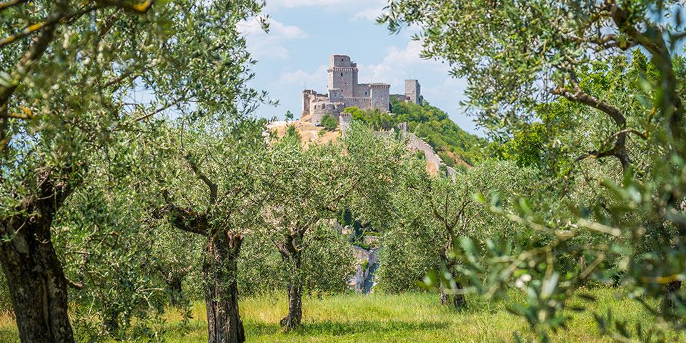 Udsigt til det grønne og  Rocca Maggiore-borgen i Assisi.