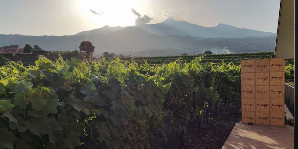 Udsigt over vinmarkerne fra Tenuta San Michele.