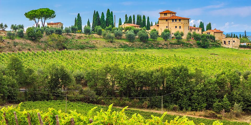 Grønne vinmarker Toscana.