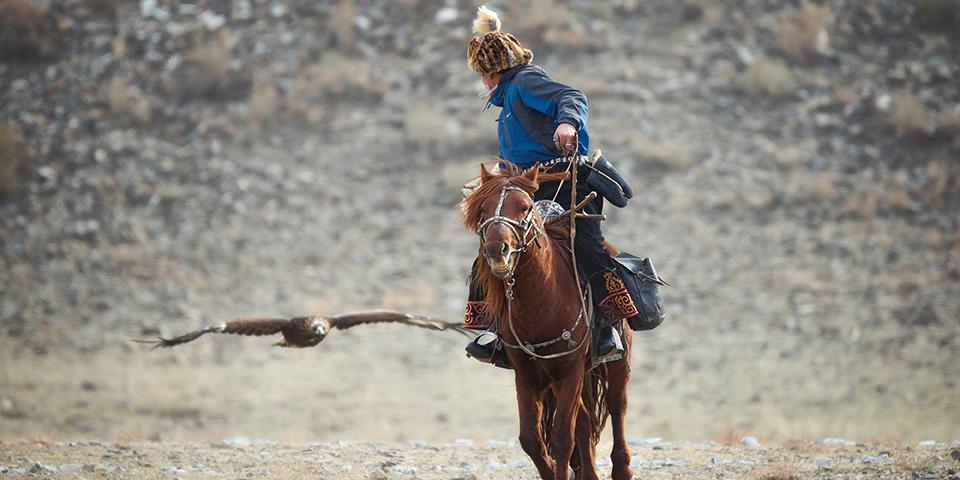 Kasakherne bruger falke og ørne til jagt.