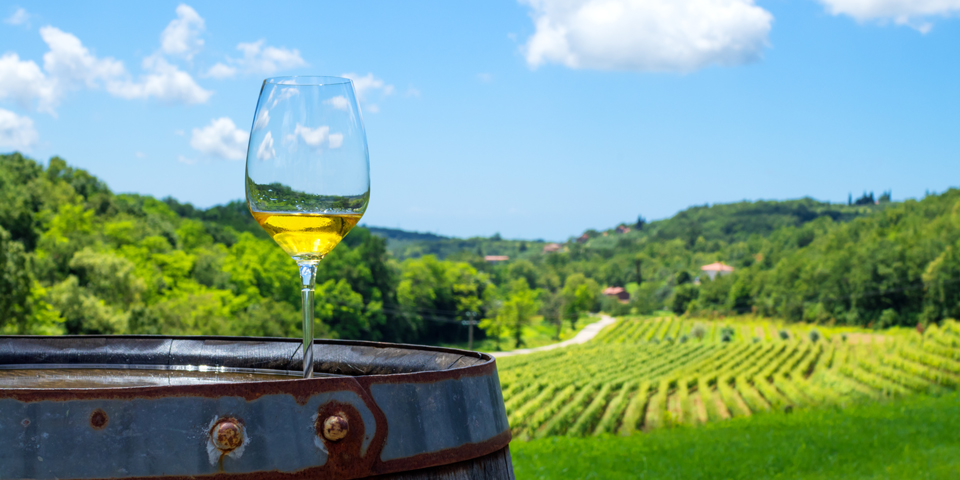 Besøg på vingård på Istrien.