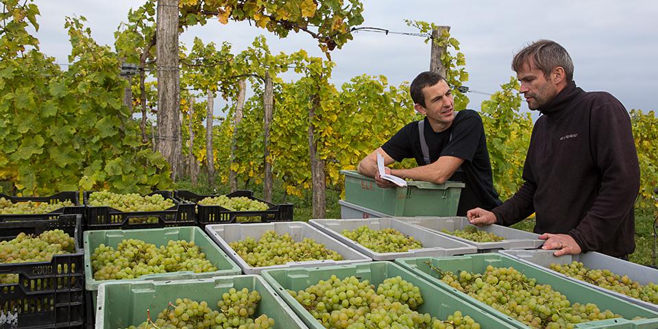 Hos Ørnberg Vin skal vi til vinsmagning.