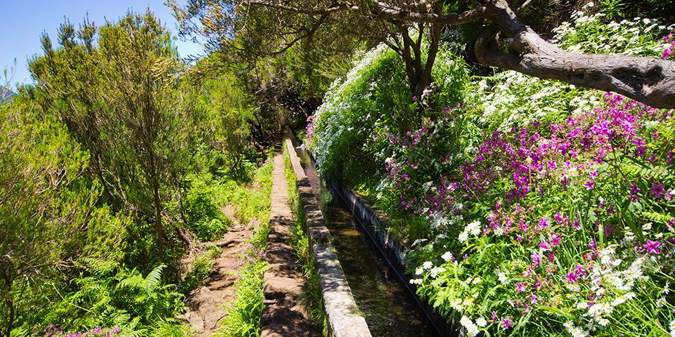 På vandretur langs Madeiras levadaer.