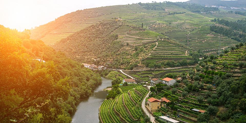 Terrasser med vin langs Dourofloden.