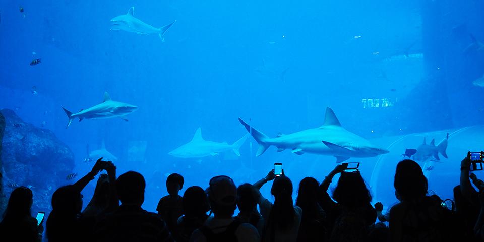 Hajer i S.E.A. Akvariet.