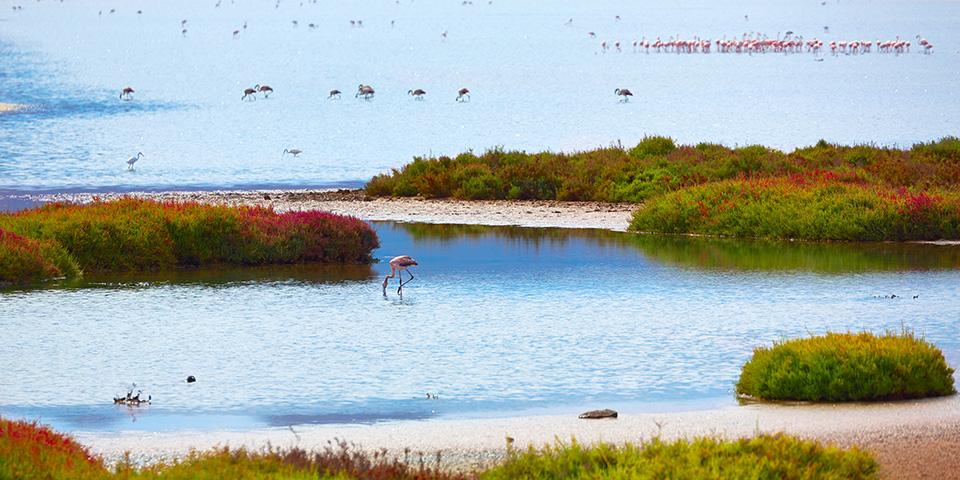 Flamingoer i Las Salinas.
