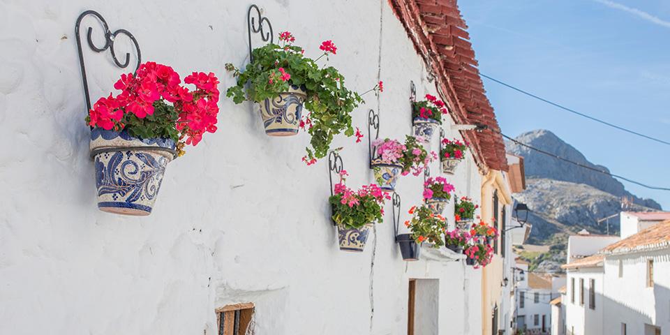 Hvidkalket væg i fuld flor i Alfarnatejo.