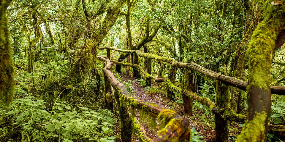 Eventyrlige Garajonay Nationalpark på La Gomera.