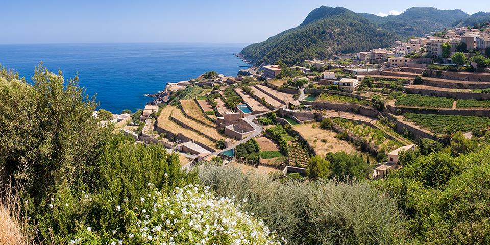 Grønne terrasser med vinstokke og oliventræer.