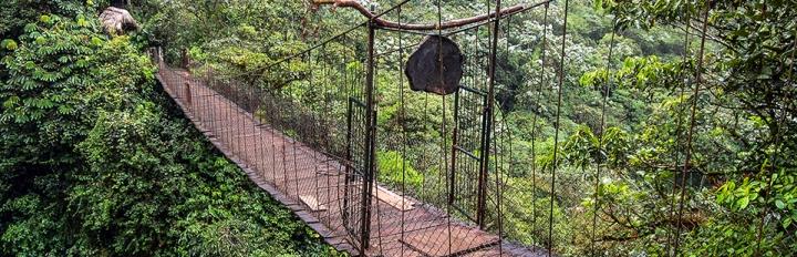 Ecuadors jungle