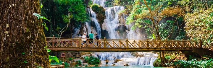 Rengskov i Laos