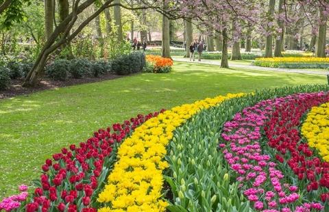 Tulipaner i Holland - Keukenhof tema