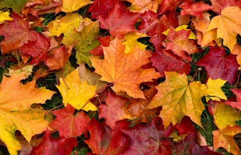 Efterårsblade.