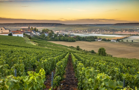 Champagnedistriktet i Frankrig.