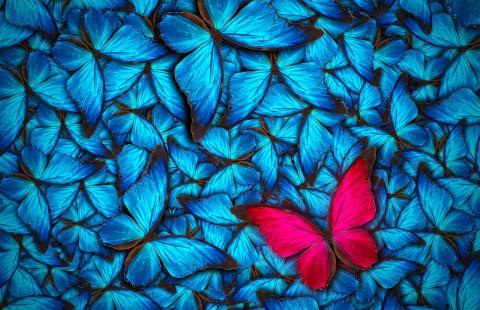 Madame Butterfly - Opera i Svendborg