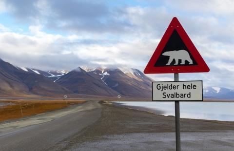 Skilt med advarsel om isbjørne.