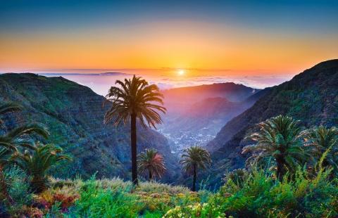 Palme, solnedgang og skønhed på De Kanariske Øer.