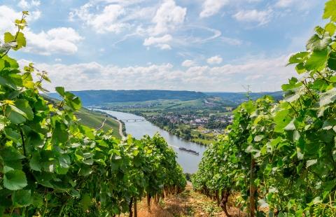 Tyske vinmarker og udsigt til Moselfloden.