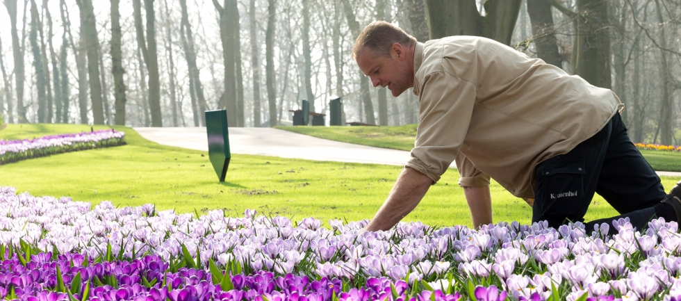 Gartner i blomsterparken Keukenhof, Holland.