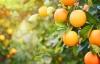 Costa Tropical byder på friske, tropiske frugter.