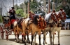 Andalusiske heste i Sevilla.