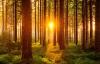 Solnedgang bag træerne i Schwarzwald.