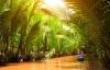 På opdagelse blandt store palmer.