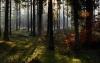 Rold skov i efterårsfarver.