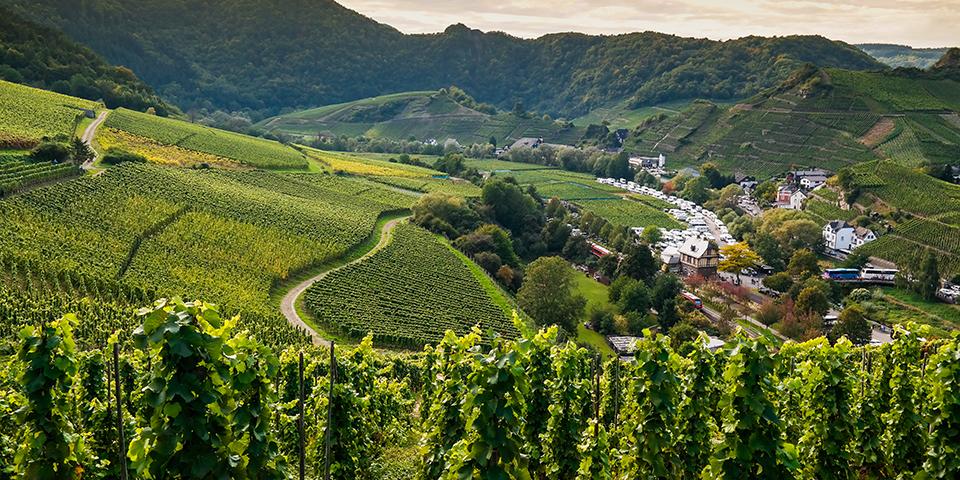 Den grønne Ahrdal omringet af vinmarker.